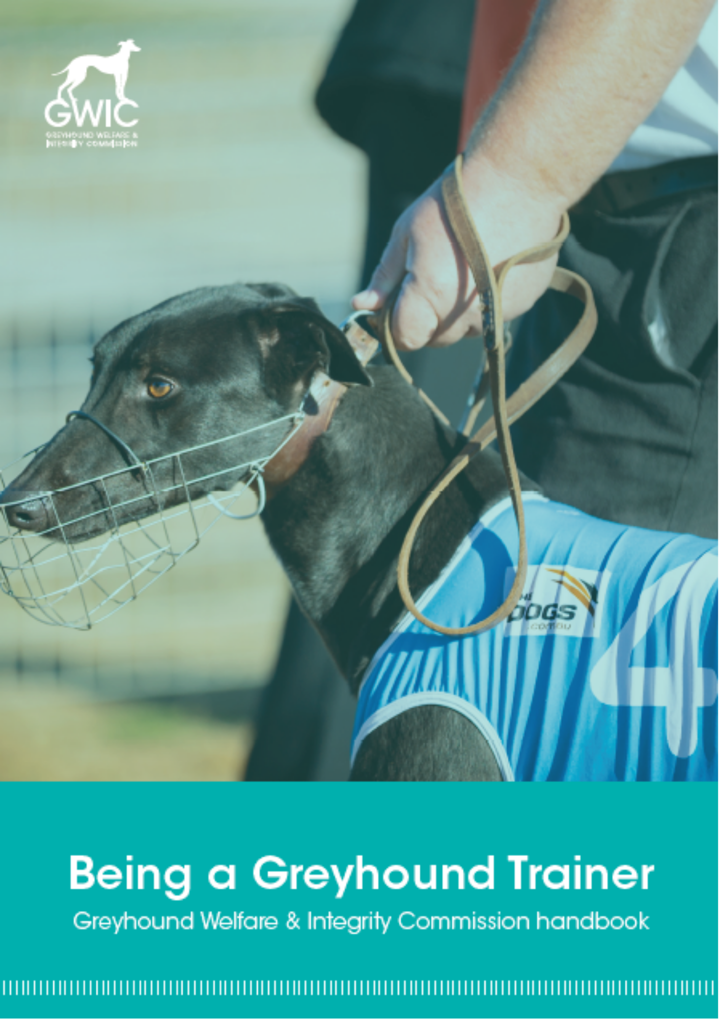Click to read Being a Greyhound Trainer
